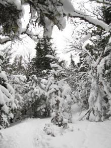 The winter wonderland of untouched snow.