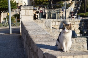 The Old City is filled with strays, which keep the rodent population down.