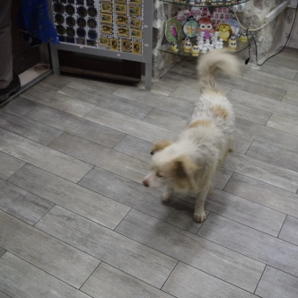 He even followed us into a souvenir shop. The shopkeeper was about to shoo him out but he wouldn't leave without us.