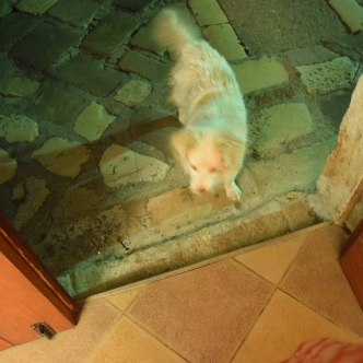 We even ducked into the hostel to try and escape him. We waited about five minutes, opened the door and there he was.
