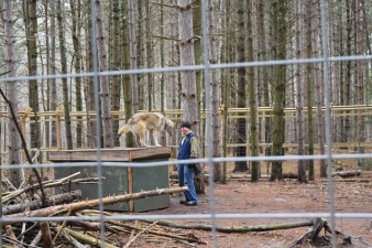 Last spring, they finished construction of the wolf enclosure.