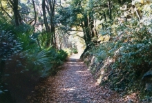 Another part of the enchanting trail to the castle.