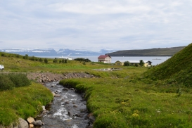 Hornstrandir National Park in the distance is where the vast majority of Arctic foxes live in Iceland.