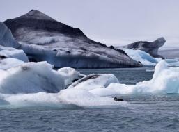 A bird catches a ride on an iceberg.