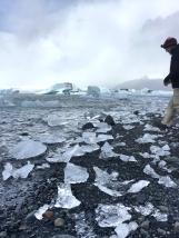 Bob explores the smaller chunks of ice on the beach.
